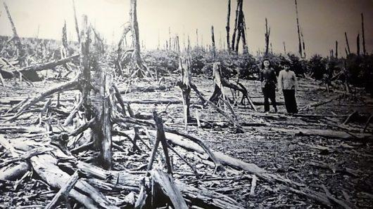 戦争 剤 ベトナム 枯葉